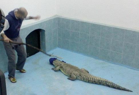 krokodil borski zoo vrt